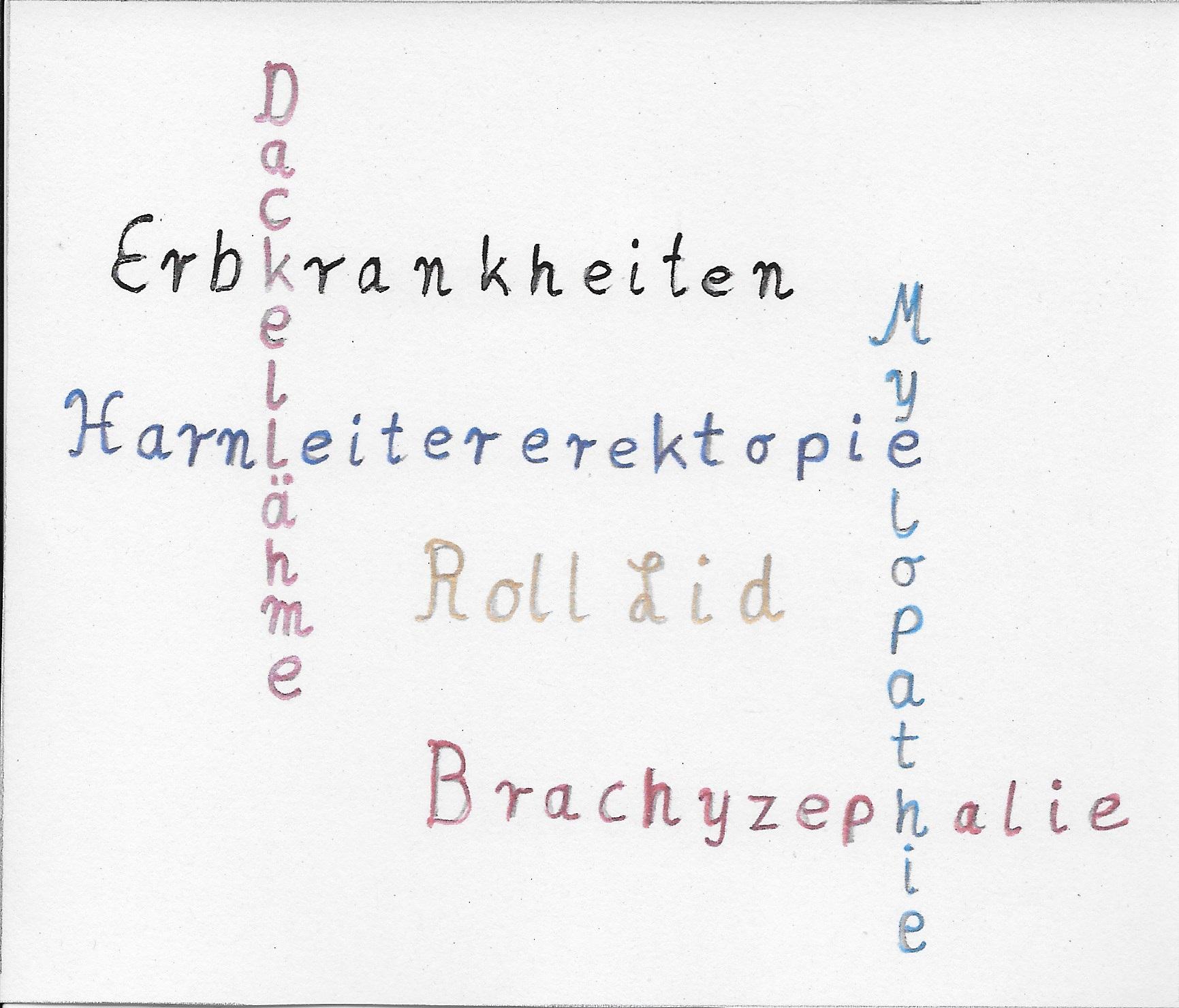 Erbkrankheiten Grafik mit allen Keywörtern der Beiträge der Kategorie Erbkrankheiten