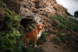 Allgemeines über Hundeparasiten. Hund kommt aus einer Höhle