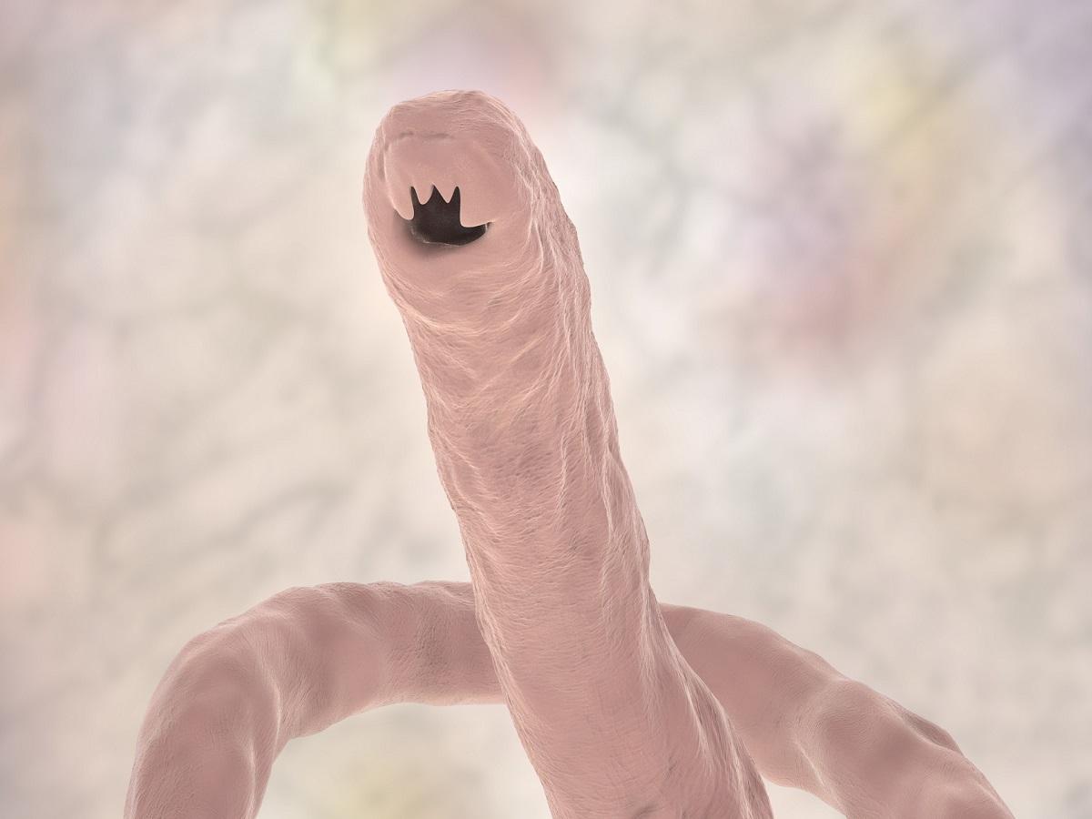 Würmer beim Hund. Hundewurm