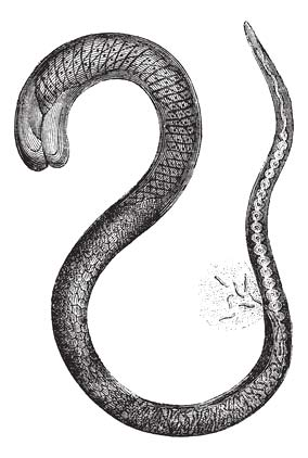 Würmer beim Hund Spulwurm Hund