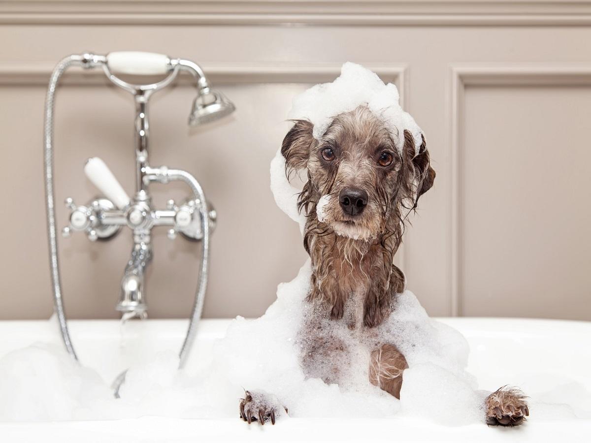 Grasmilben beim Hund. Hund in Badewanne