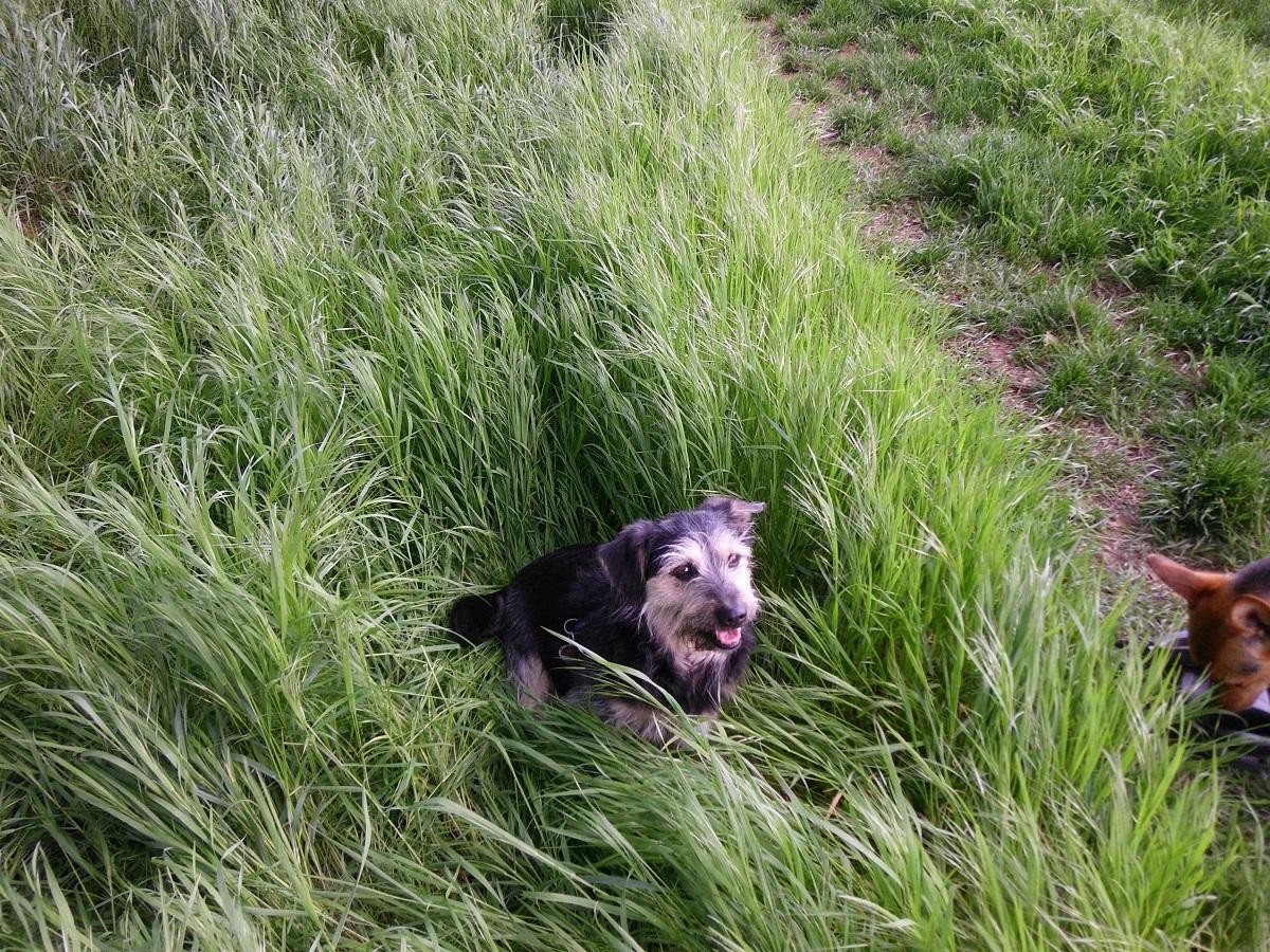 Startseite Milben beim Hund. Hund im hohen Grass