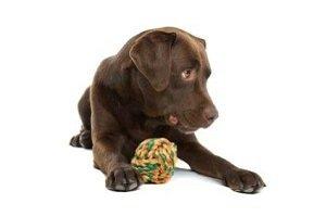 Würmer beim Hund. Welpe sitzend mit Ball aus Garn